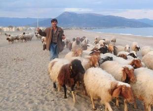 Anamur'da hayvancılık kör topal
