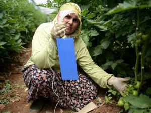Çİftçilere destek Mersin Büyükşehir Belediyesi'nden
