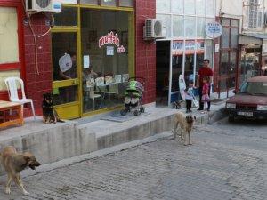 Mut'ta başıboş sokak köpekler toplanıyor