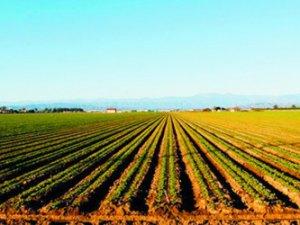 Mersin'e tarım dışı kullanım uyarısı