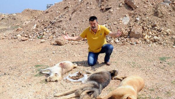 Mersin'de köpek katliamı!