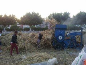 Bozyazı'da ekin hasadı başladı