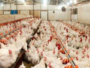 Tarsus'a etlik piliç üretim tesisi kurulması için Bakanlık'tan onay çıktı