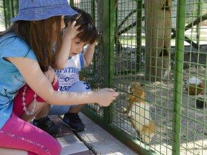 Çukurova Bölgesi'nin ilk ve tek doğal yaşam merkezi: Tarsus Hayvan Parkı