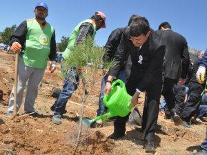 Başkan Turgut, Şehit Cumhuriyet Savcısı Mehmet Selim Kiraz anısına fidan dikti