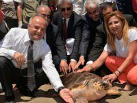 Mersin'de Korykos ve Kilikya adlı deniz kaplumbağaları 3 yıl sonra denizle buluştu
