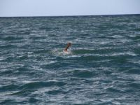 Anamur'da denize giren 1 kişi kalp krizi geçirdi