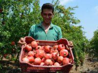 Yılın ilk nar hasadı Silifke'de yapıldı