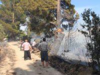 Mut'ta orman yangını