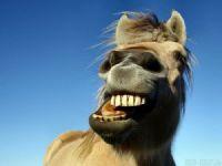 Anamur'da cinsel organı at tarafından koparılan çocuğun cinsel organı yerine dikildi