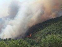 Silifke'de orman yangını: 15 hektarlık alan kül oldu