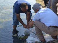 Tarsus'ta gölete 25 bin yavru balık bırakıldı