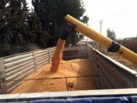 Mersin'de alternatif tarım ürünleri arayışı sürüyor