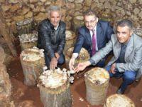 Erdemli'de kayın mantarı üreticiyi sevindirdi