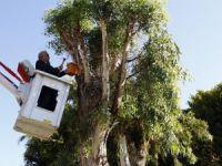 """Erdemli Belediyesi'nden doğal yaşama """"kuş yuvası"""" desteği"""