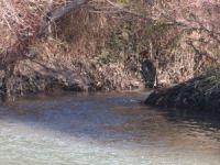 Zeytinyağı fabrikaları Göksu Irmağı'nı kirletiyor