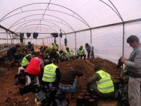 Erdemli'de belediye serasında yoğun çalışma