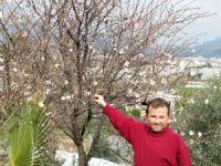 Bozyazı'da badem ağaçları çiçek açtı