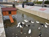 Anamur Belediyesi'nin Ördek Evi Yerleştirildi