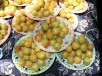 Mut'ta Kayısı Festivalinin hazırlıkları sürüyor