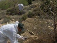 Mersin'de Orman Zararlılarıyla Biyolojik Mücadele